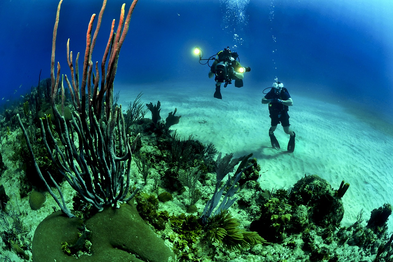 Cairns Tours and Travel English Cairns student share house - Reef Diving