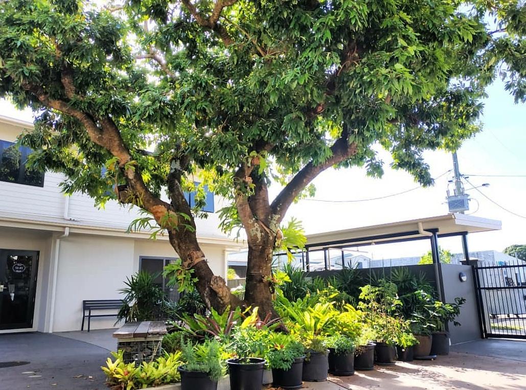 Cairns Kangarooms - Communal Herb Garden - Cairns Share Accommodation